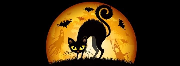 ¡Oh my Cat!